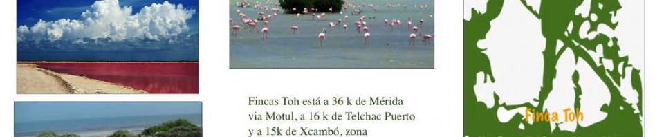 Terrenos en Dzemul Yucatán